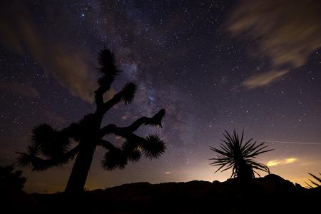 joshua: Milky Way at night in Joshua Tree National Park.