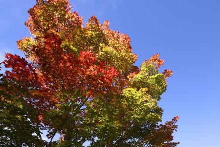 colour in: A partir de otoño de color en un bosque.