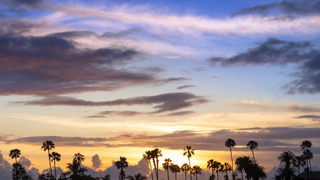 california beach: Palm trees in California beach during sunset. Stock Photo