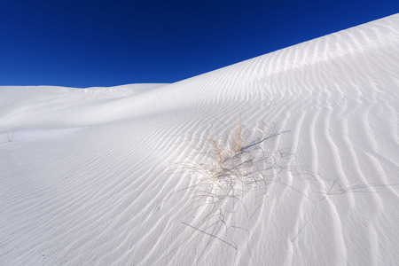 chihuahua desert: Soaptree yucca in White Sands National Monument. Editorial