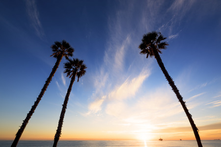 huntington beach: Palm trees at sunset, Huntington beach, California.