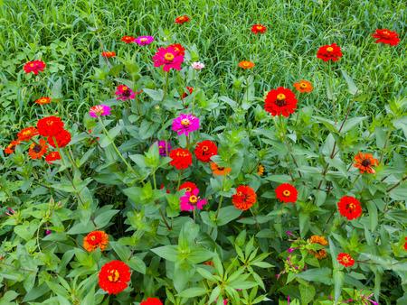 Vivid red flower Zdjęcie Seryjne