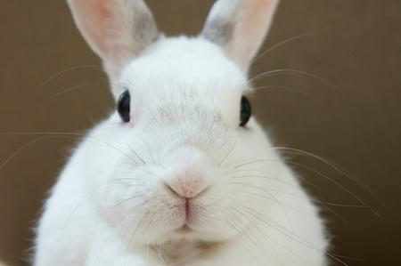 白いウサギ。ウサギのクローズ アップ写真。 写真素材