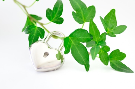 Environmental protection. Image of the feelings you try to protect plants. Stock Photo - 12855721