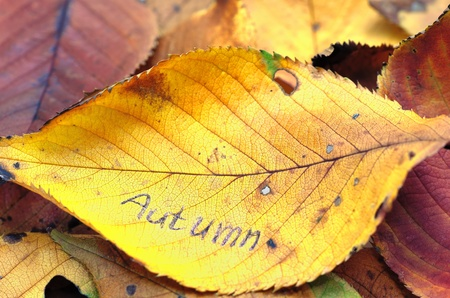 Autumn leafs. Colorful background of dry autumn leaves. photo