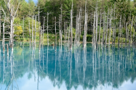 biei: Blue Pond in Biei, Shirogane. taken in Hokkaido, Japan on a sunny summer day.