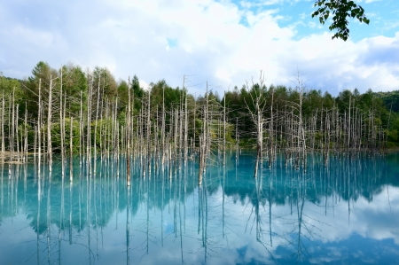 Blue Pond in Biei, Shirogane. taken in Hokkaido, Japan on a sunny summer day.