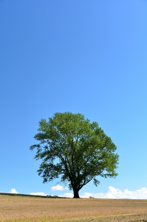 Landscape of Biei, Hokkaido. (Poplar tree) In Japan, it is called the tree of philosophy.