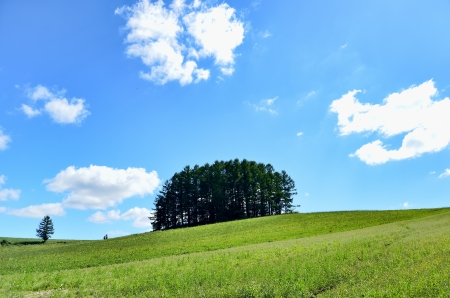 biei: Landscape of Biei, Hokkaido. (Small forest on the hill) Stock Photo