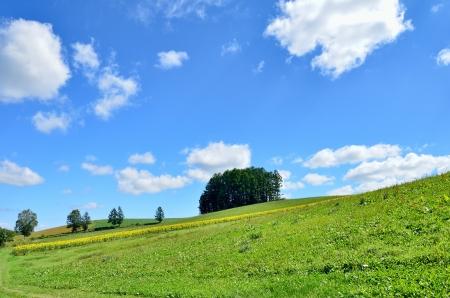 biei: Landscape of Biei, Hokkaido   Small forest on the hill