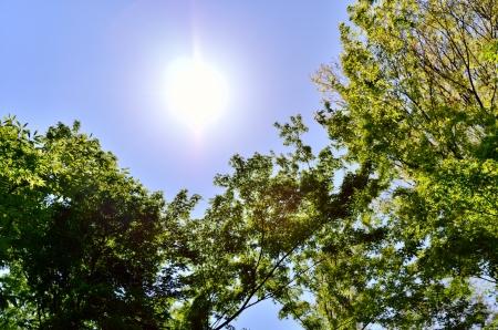 Sun and fresh green. (Early summer season) Stock Photo - 20415465
