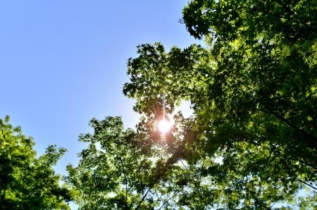 Sun and fresh green. (Early summer season) Stock Photo - 20415464
