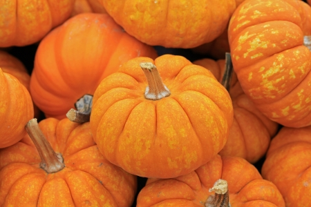 Small, orange pumpkins close up