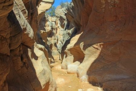 willis: Willis Creek Canyon, Utah