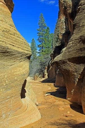 willis: Opening of Willis Creek Canyon - Utah