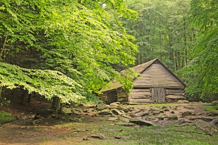 Wooden barn in forest