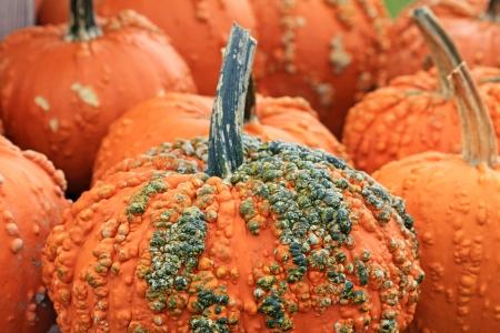 warts: Orange pumpkin with warts