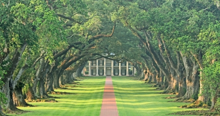 Green tunnel, Vacherie, Louisiana