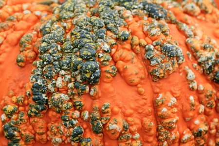 warts: Texture of pumpkin covered with warts