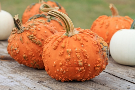 warts: Pumpkins on the wooden table Stock Photo