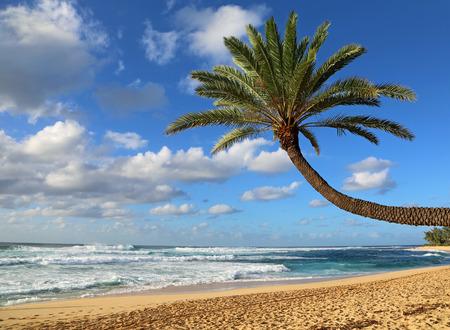 sloping: Sloping palm tree on the beach, Oahu, Hawaii Stock Photo
