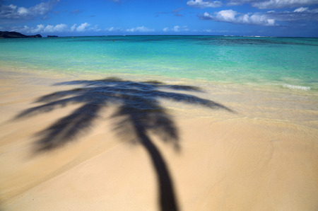 Palm trees shadow on Lanikai Beach, Oahu, Hawaii Stock Photo - 36497890