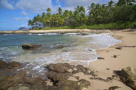 Oahu: Wild coast of west Oahu Hawaii