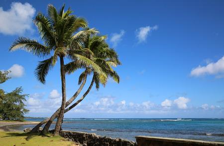 Oahu: Aukai Beach  Oahu Hawaii