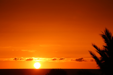 naranja arbol: puesta de sol en Florida Touchdown-