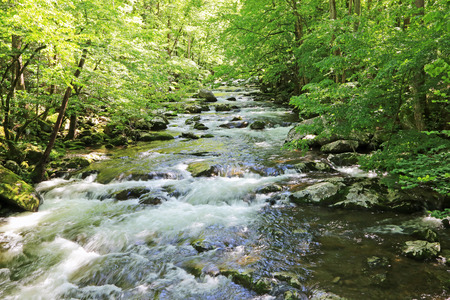 great smoky mountains: Pigeon River - Great Smoky Mountains National Park, Tennessee Stock Photo