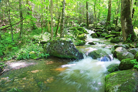 great smoky mountains: Creek in forest - Great Smoky Mountains NP, Tennessee Stock Photo