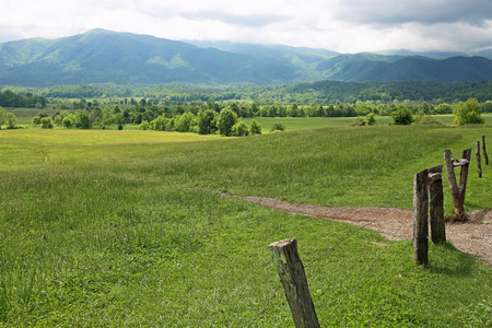 great smoky mountains national park: Meadow in Great Smoky Mountains National Park, Tennessee