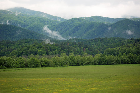 tennesse: Montañas Humeantes - Tennessee