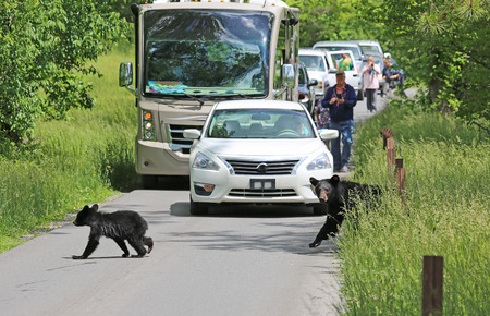 great smoky national park: Bear traffic - Great Smoky Mountains National Park, Tennessee Stock Photo