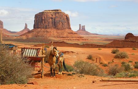 arizona scenery: Horse in western scenery - Arizona Stock Photo