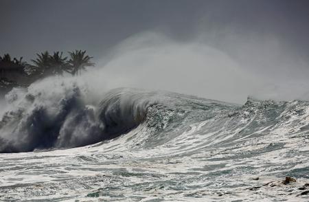 Oahu: Palm trees and wave - Oahu, Hawaii