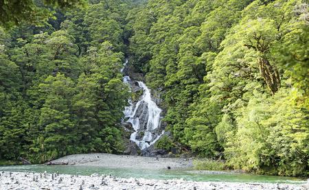 fantail: Fantail Falls, New Zealand