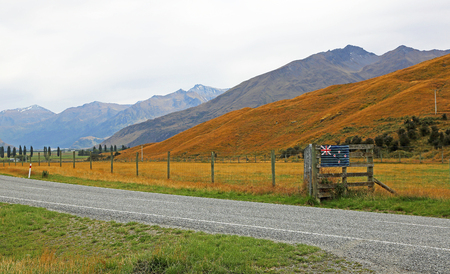 New Zealand pasture