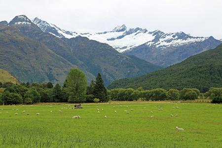 The pasture and Rob Roy glacier, New Zealand Stock Photo