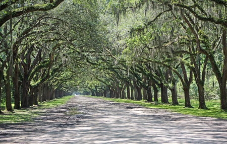 Oak Alley - Savannah , Georgia