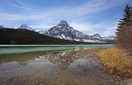 Mount Chephren and tree, Alberta, Canada Banco de Imagens