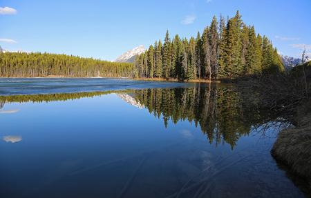 Forest on Herbert Lake, Banff NP, Canada