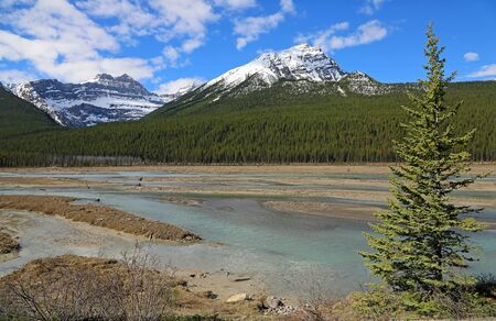 Landscape with a tree, Jasper NP, Canada