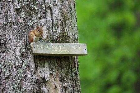 Chipmunk in West Virginia State Wildlife Center