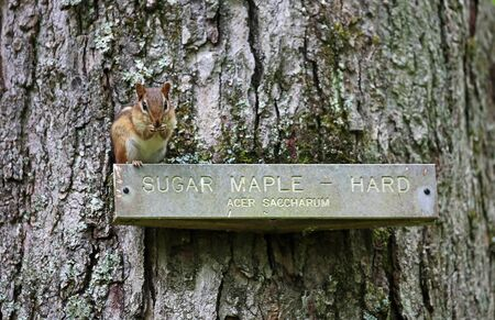 Trees name plate with a chipmunk