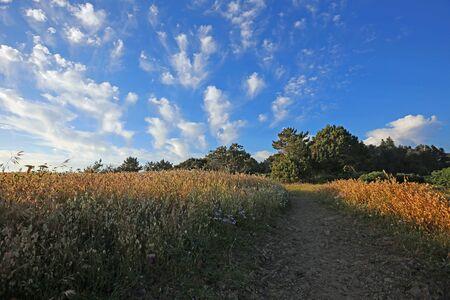 Walking California meadow Archivio Fotografico - 138267021