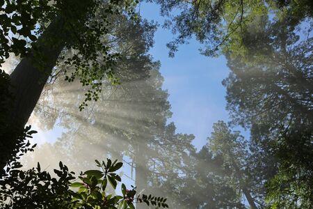 Sunrays behind the tree, California Stock Photo