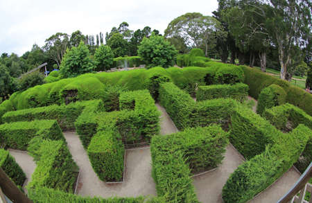 View at the green maze - The Ashcombe Maze and Lavender Gardens, Victoria, Australia