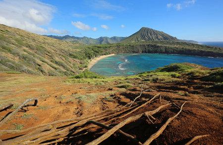 Roots and Hanauma Bay, Oahu, Hawaii
