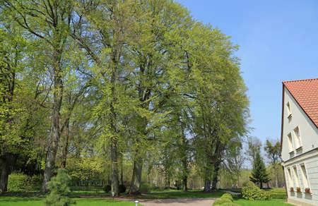 Old trees in Cathedral Park in Gdansk Oliwa, Poland Archivio Fotografico